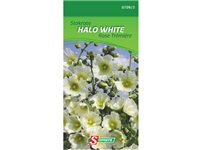 Sachet Graines Rose Trémière Somers 'Halo White' d'occasion