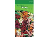 Sachet Graines Cheiranthus Somers 'Cheirii', occasion d'occasion
