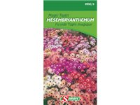 Occasion, Ficoide Tapis Magique Somers 'Mesembryanthemum' d'occasion